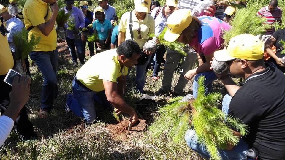 Empleados del INVI realizan jornada de reforestación